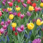 Lalele_multicolore1