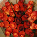 trandafiri portocalii 150x150 Buchete de tranda