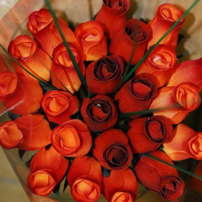 trandafiri_portocalii